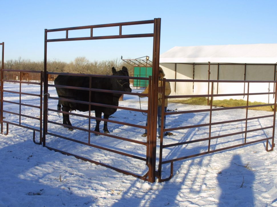 Cow and Ranch Panel